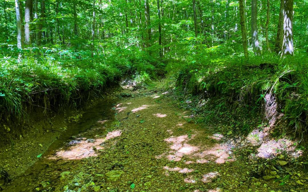 Hiking with Shawn's Trail Guide Series: Horse Creek Trail