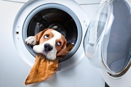 洗濯機にイタズラをして引っ越しの邪魔をする犬の画像