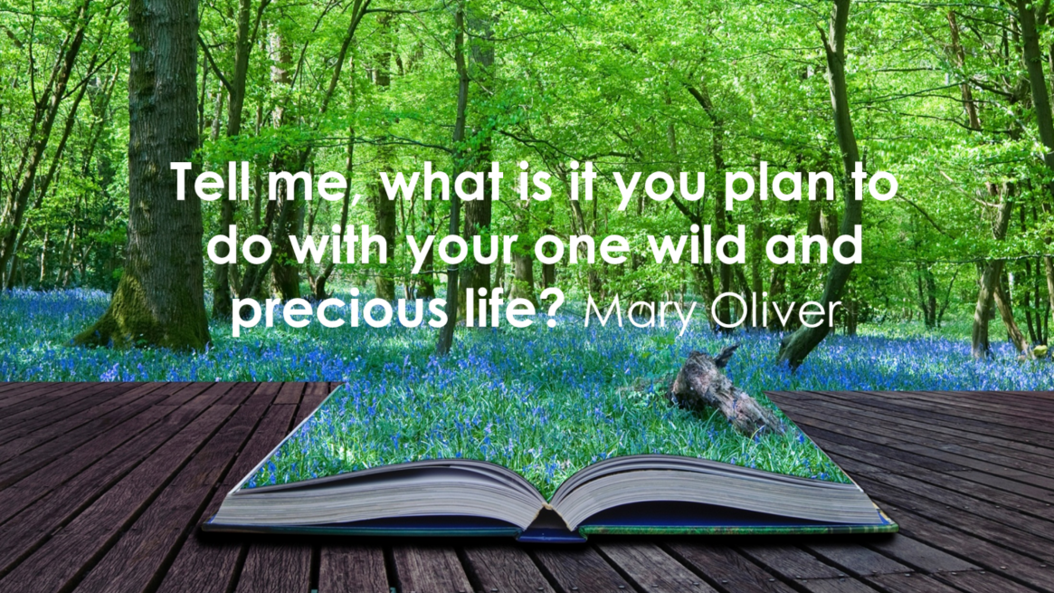 Mary Oliver Quote Harvard Project Blog 1