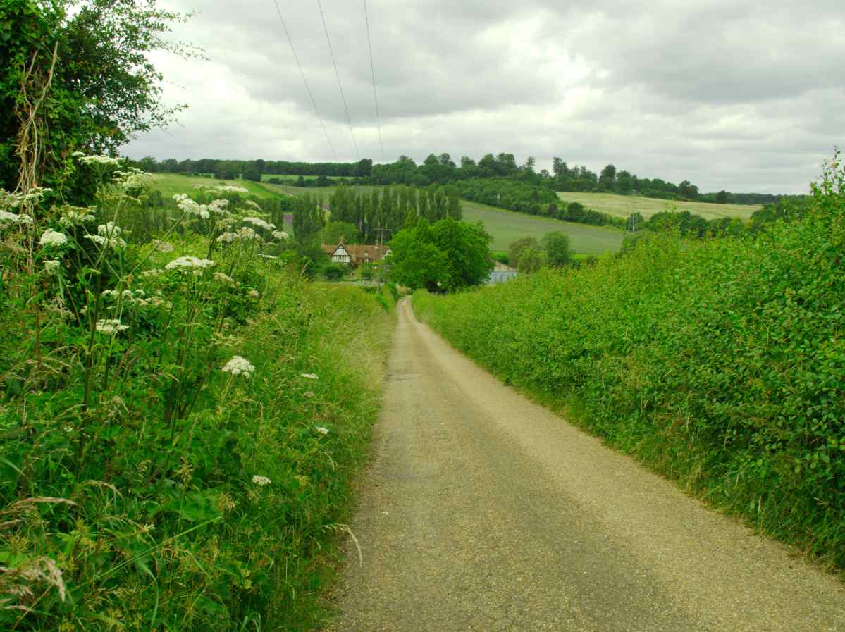 bustle in the hedgerow