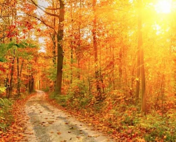 Spectacular Fall Foliage West Virginia Amp Northern Virginia