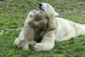 polar bear zoo mothers day