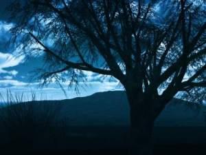 Hillis_Pugh_Awakening_Meditation