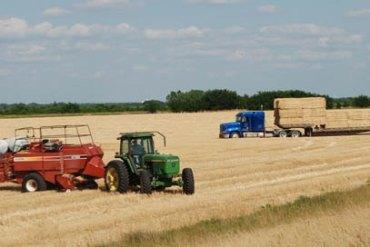 Baling Wheat