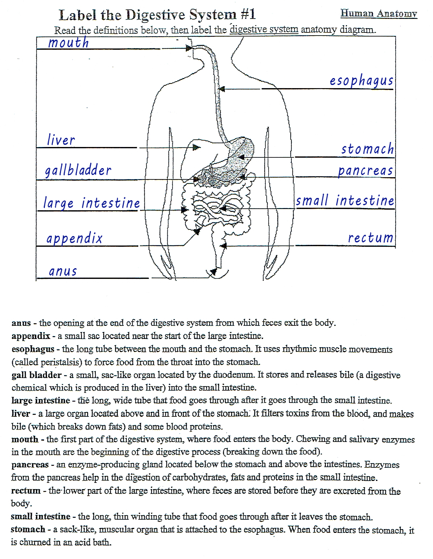 75 Free Grade 1 Human Body Worksheets Printable Docx