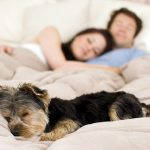 Should You Let Your Dog Sleep In Your Bed Hill S Pet