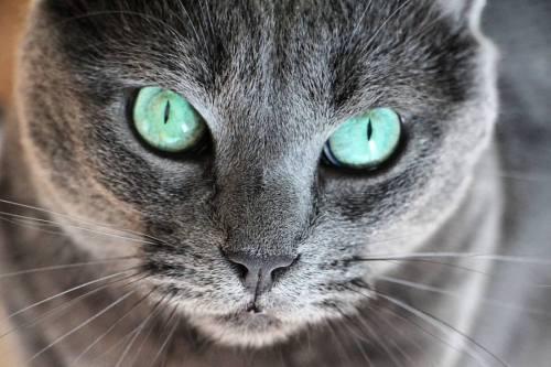 El gato de CharcoTrip