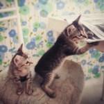 De blogueras, de amor y de gatos