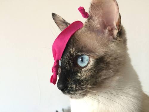 La gata Cata inspiró el blog HastaProntoCatalina, de Guada Araoz.