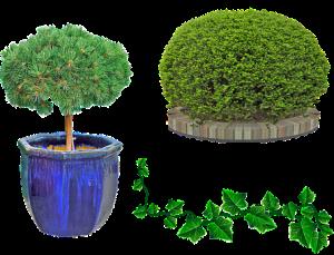 outdoor plants-yard