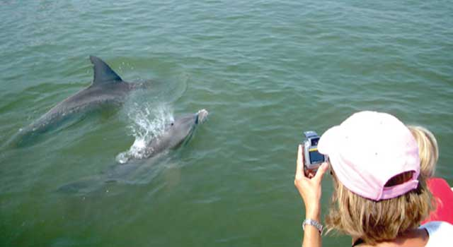 Image result for hilton head dolphins