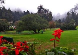 bell-flower-botanical-garden
