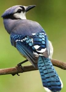 Rare Bird at Renuka Sanctuary
