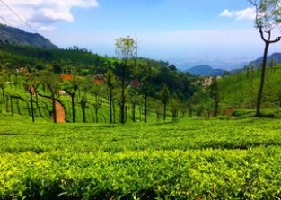 Tea Factory and the Tea Museum at Ooty