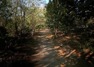 Freedom_Trail_Las_Piñas-Parañaque_Critical_Habitat_and_Ecotourism_Area_LPPCHEA