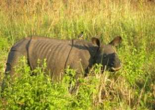 Assam-The Wildlife State Of India ! 3