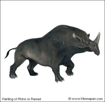 Ramad or Rhino