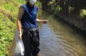 神戸川清掃