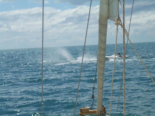 exmouth-whale2.jpg