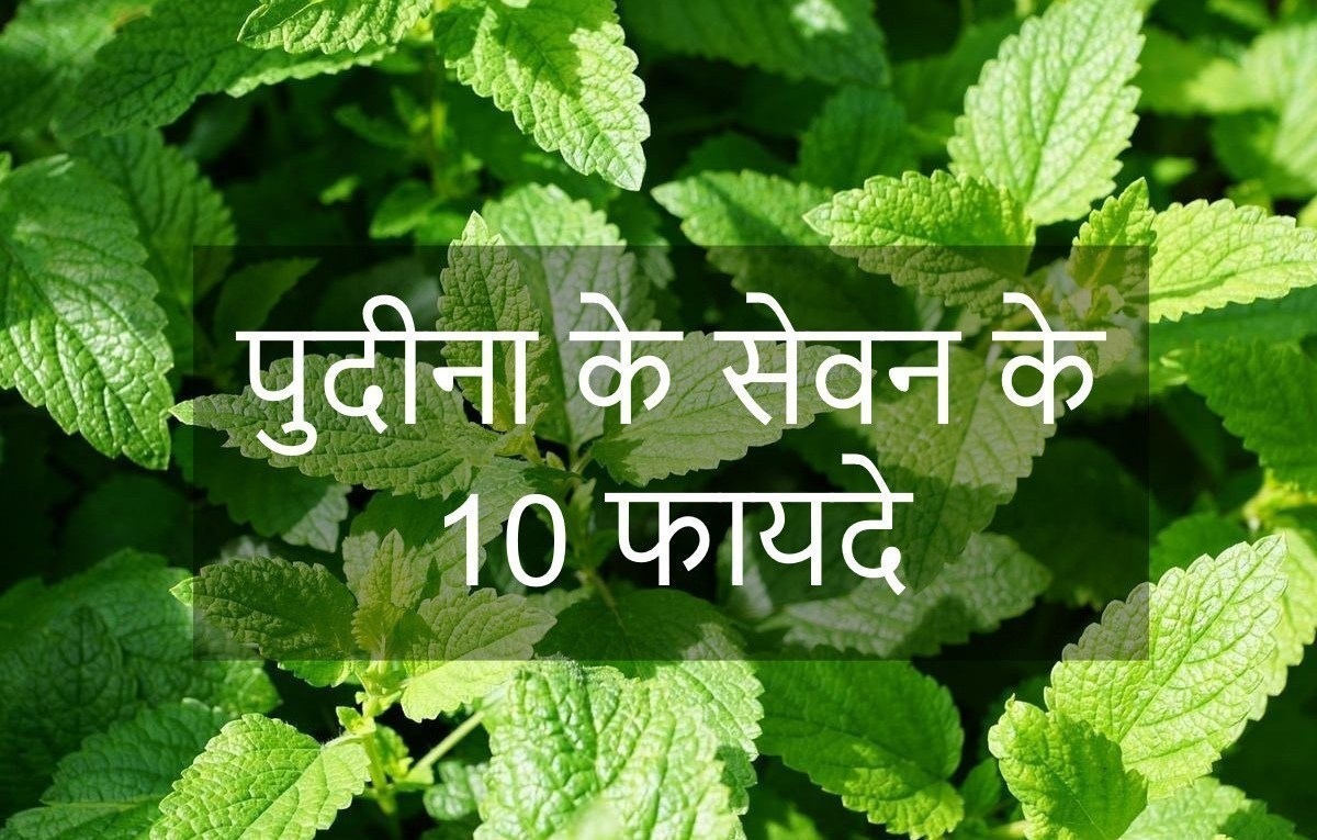What is Peppermint in Hindi