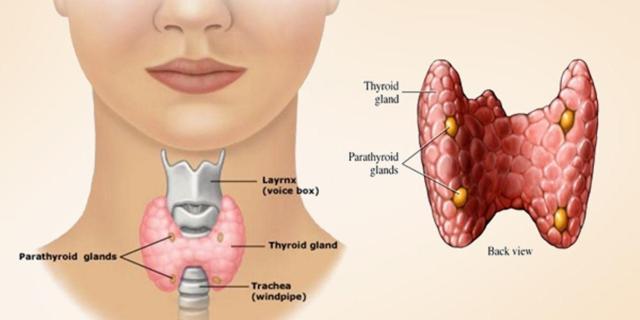 थायराइड की बीमारी के क्या लक्षण हैं?