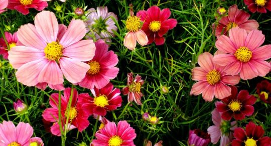 Flowers Name in hindi and english   study portal of dictionary Flowers Name in Hindi and English