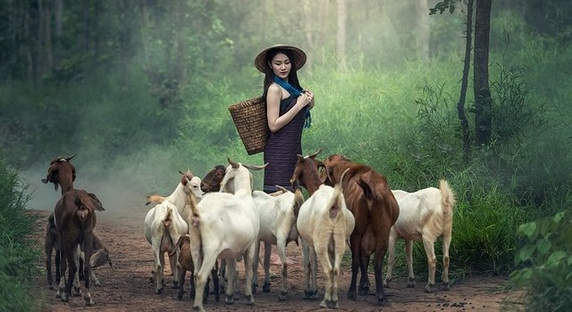 goat farning business plan in hindi