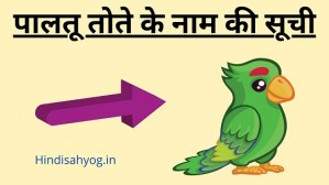 Pet Parrot Names In Hindi