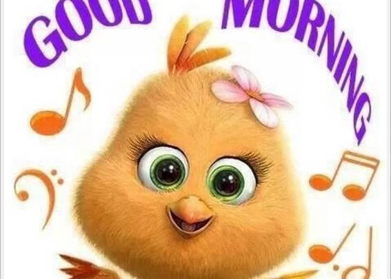 good morning photo hd40