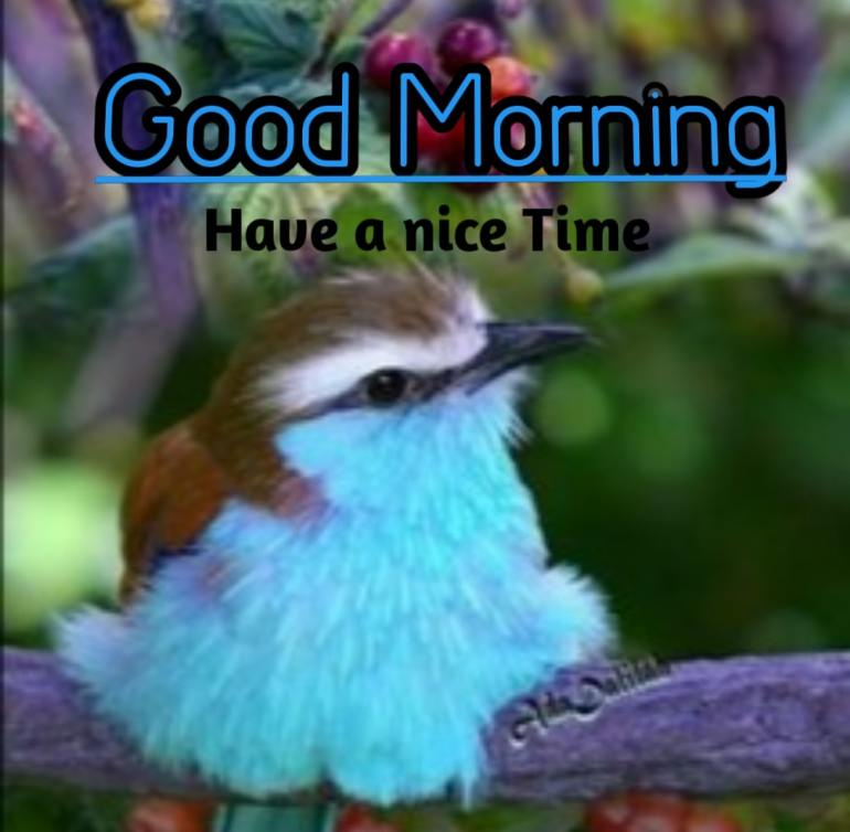 Best Good Morning Images hd9