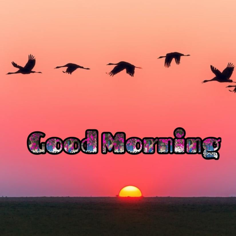 Best Good Morning Images HD Free Download 29