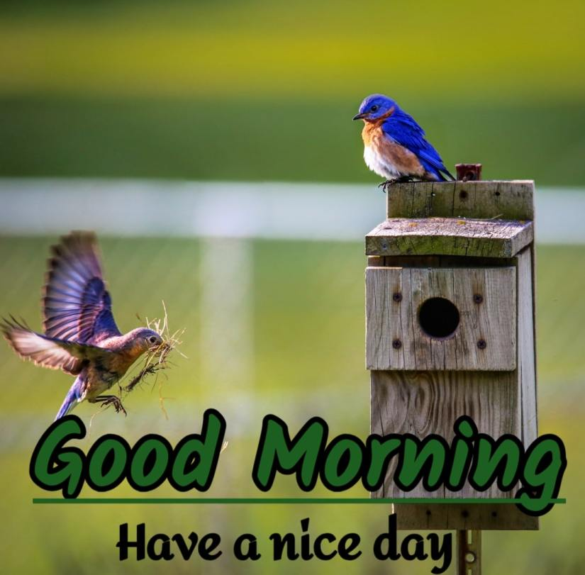 Best Good Morning Images HD Free Download 5 1