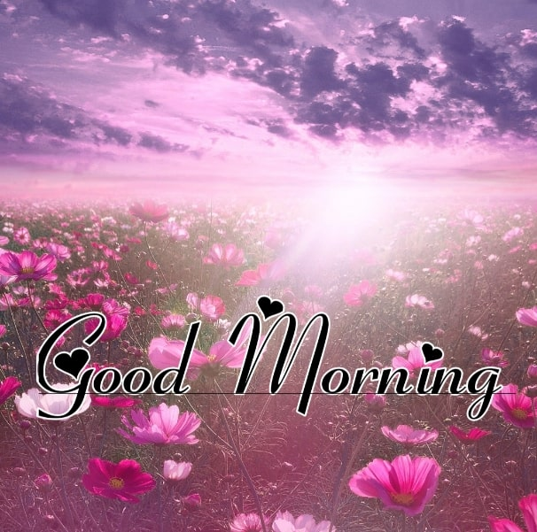 Best Good Morning Images HD Free Download 73