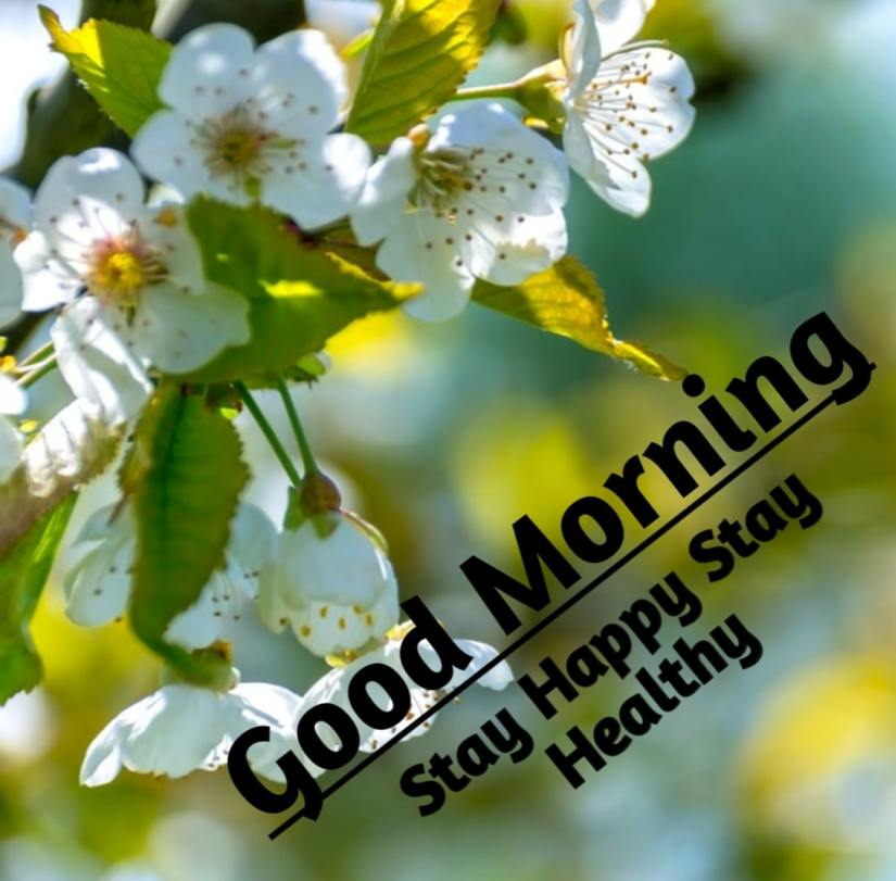Best Good Morning Images HD Free Download 8