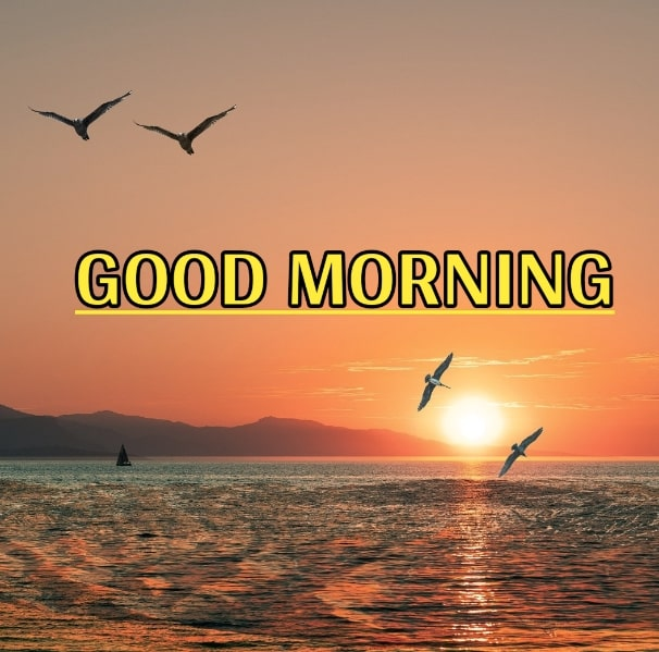 Best Good Morning Images HD Free Download 95