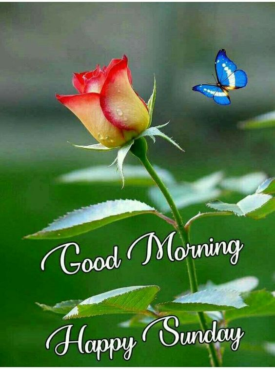 829 Sunday Good Morning Images Quotes Pics Wishes In Hindi