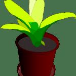 plant-161138_1280