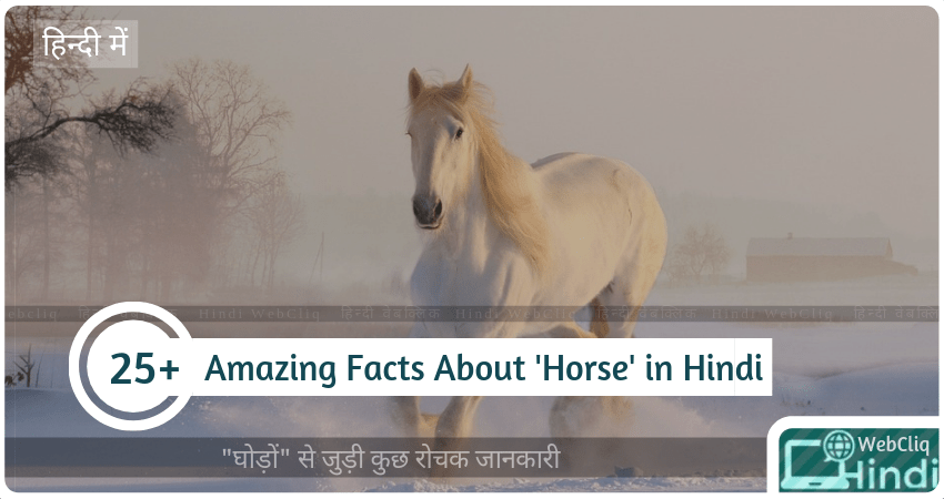 fascinating facts horse in hindi