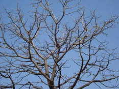 dry_tree