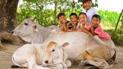 Cow Protection Cow Slaughter Animal Lives Matter Gau Sewa