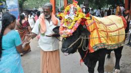 Temple Sacred Bull