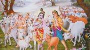 Cattle Smugglers Rampant in Sri Krishna's Mathura