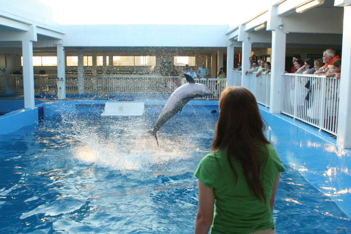 family photographers in clearwater marine aquarium by clearwater beach photographer