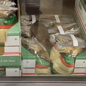 Rat in Costco