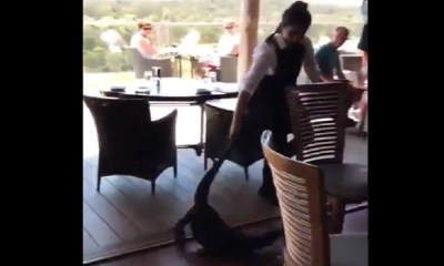 Waitress drags alligator out of restaurant