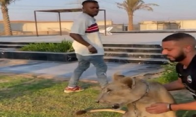 DaBaby runs from a lion after the lion touches him