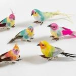 Voorjaarsvogeltjes