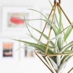 Draadzaken voor de hipste plantendecoraties
