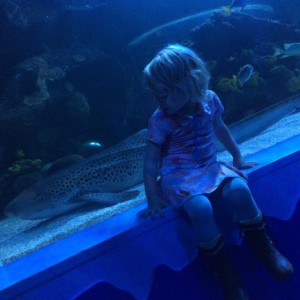 Lenthe sealife
