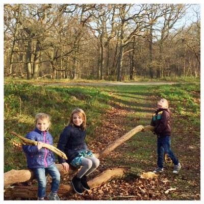 De leukste bossen van Nederland met kinderen in het bos op de boom
